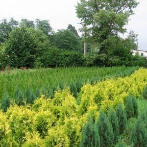 Pepiniera din Simeria, înființată în urmă cu 70 de ani, se desființează, după ce terenul a fost retrocedat